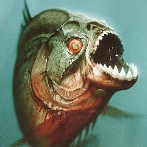 piranha300