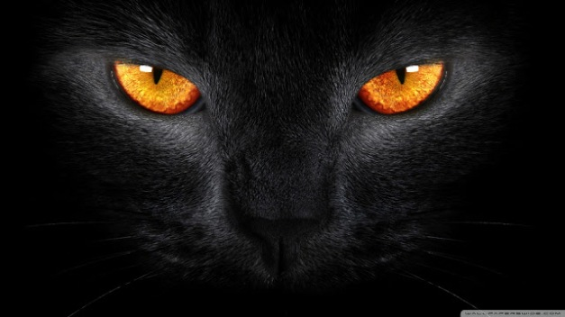 black_cat_5-wallpaper-1920x1080